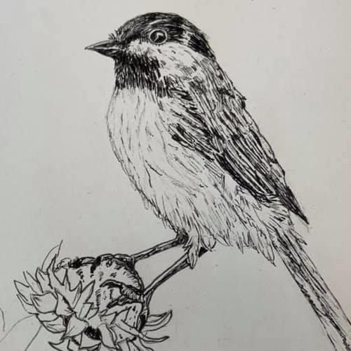 Pencil drawing of a bird