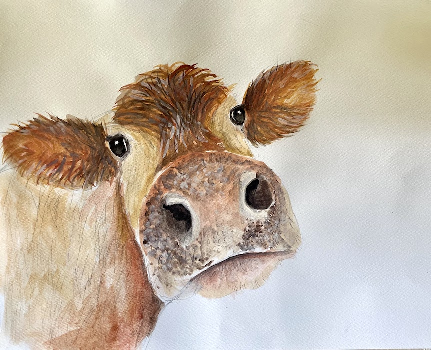 """Featured image for """"Brown Cow"""""""