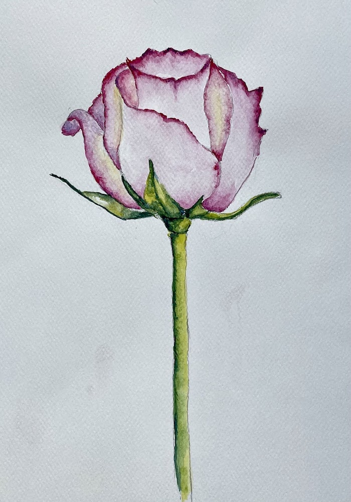 """Featured image for """"Rose in Watercolour"""""""